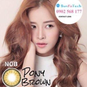 kinh ap trong mau nau NOB Brown